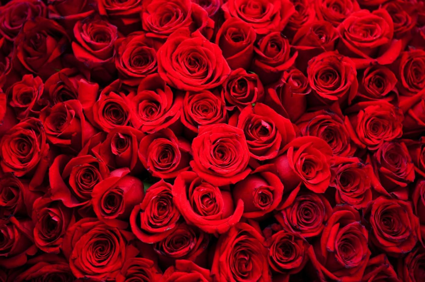 Купить миллион роз в компании ФАВОРИТ в Санкт-Петербурге.